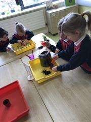 Planting Daffoldils and Number Work!